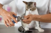 Petzrush Pet Grooming Services