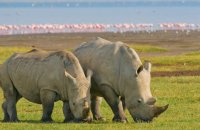 Wildlife Safari Holiday Packages